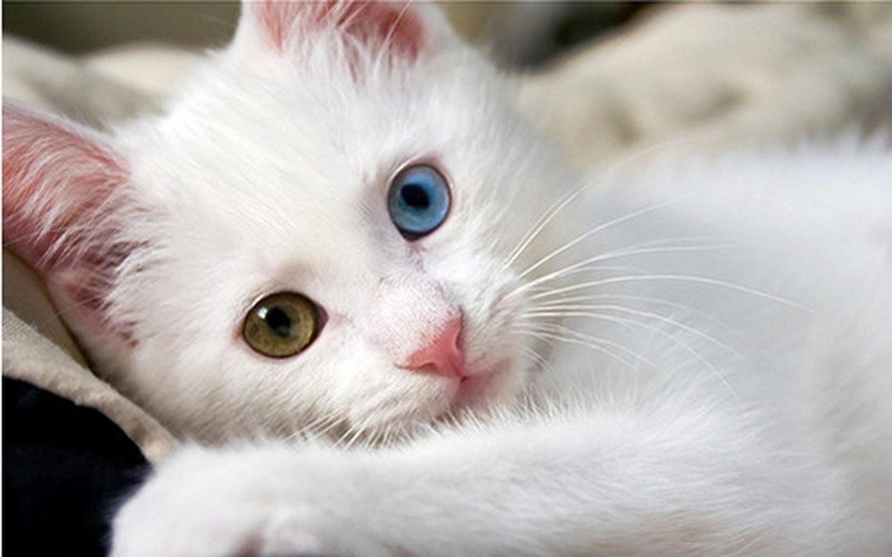 Rüyada Birinin Kedi Eti Yediğini Görmek Ne Anlama Gelir